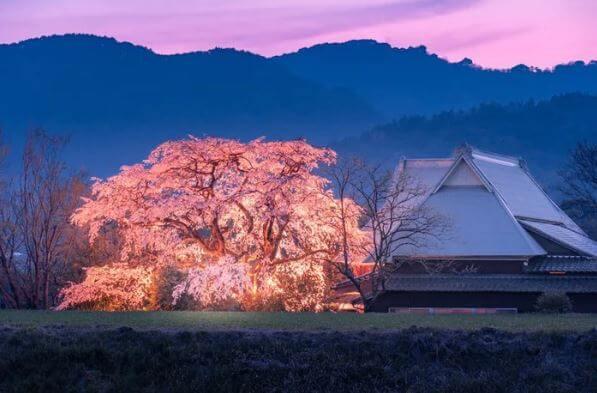 Mùa sakura Nhật Bản qua ống kính của một nhiếp ảnh gia.9